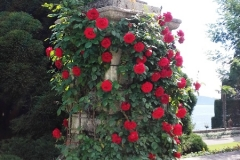 Ile Bella Visites avec Guide rose