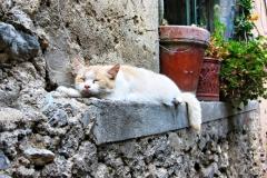 amalfi gatto Cote Amalfitaine Visites avec Guide