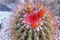 cactus-Cote Amalfitaine Visites avec Guide