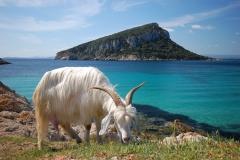 visites avec guide Sardaigne (3)